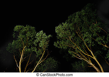 Trees in the park at night