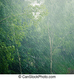 Trees in the rain - Hard rain covering trees in the yard