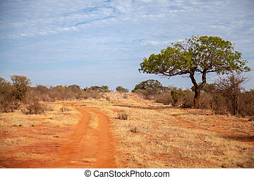 Trees in the savannah of Kenya, blue sky with clouds, a red road