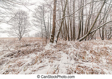 Trees in the snow in the forest