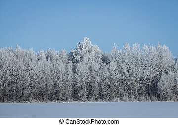 Trees in the snow on a sunny frosty day. Winter forest. Russian landscape