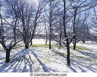Trees in the snow on sunny day