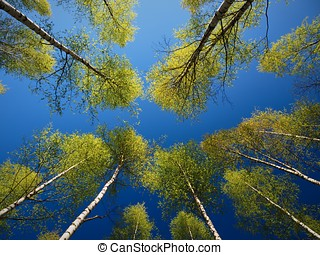 Trees in the Springtime Forest.