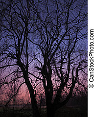 Trees In The Sunrise