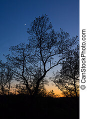 Trees in the sunset