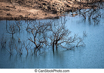 trees in the water