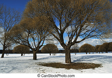 trees in the winter park
