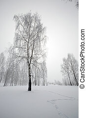 trees in the winter