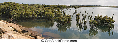 Trees in tidal waters