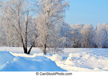 Trees in white hoarfrost