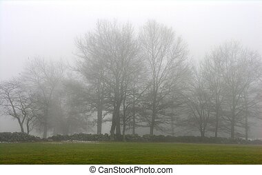 Trees in winter fog.