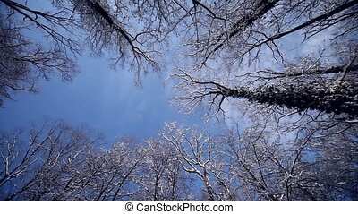 Trees in Winter