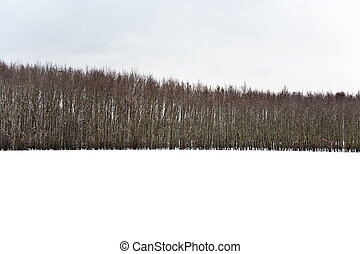 trees in winter with snow covered fields
