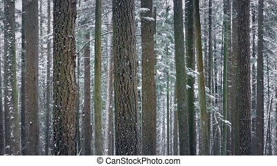 Trees In Winter With Snow Falling - Looped