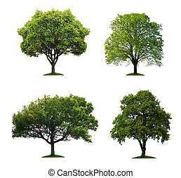 Green trees isolated over white