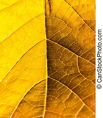 tree's leaf texture in yellow color