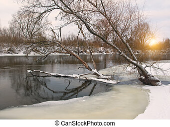 Trees leaned over the river in water