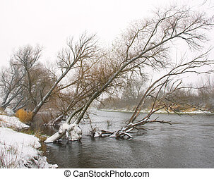 Trees leaned over the river in winter