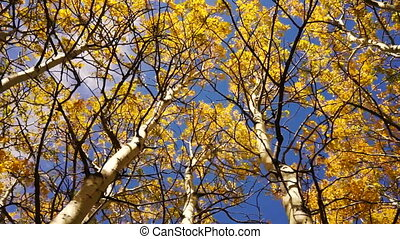Trees Leaves Wind Blown Autumn Nature Scene Fall Color -...