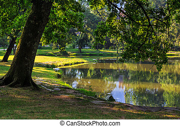trees near a pond in city park - trees in the morning sun...