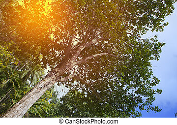 Trees of tropical climate, bottom v