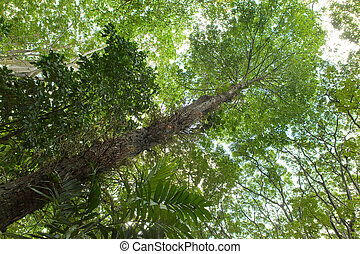 Trees of tropical climate, bottom view.