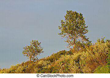 Trees on a cliff.