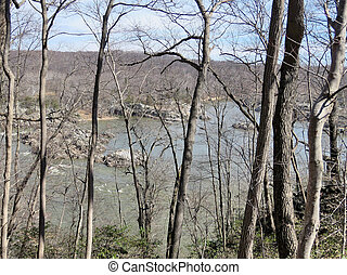 Trees on a coast of the Potomac River