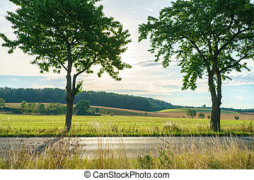 Trees on a country road in the midday sun