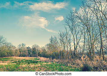 Trees on a field with blue sky