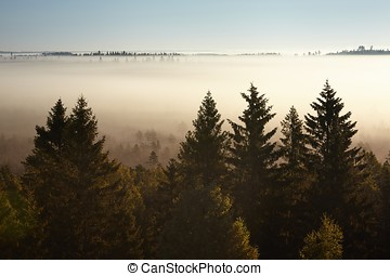 Trees on a foggy morning - Trees in morning fog. Silhouettes...