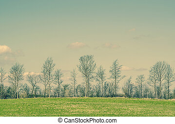 Trees on a green field