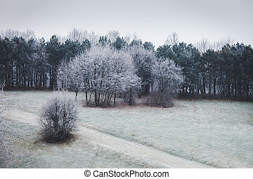 trees on a hill covered with frost