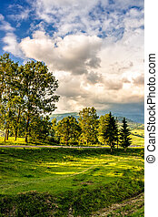 trees on a hill side near the mountain road - few trees on a...
