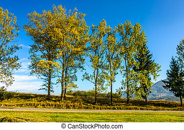 trees on a hill side near the mountain road