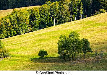 trees on a hillside meadow. wonderful nature scenery in...