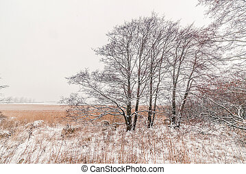 Trees on a meadow with snow