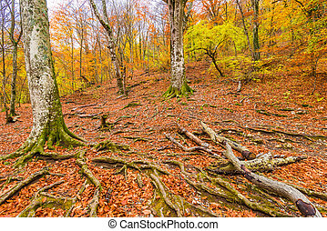 trees on a mountainside, autumn forest landscape