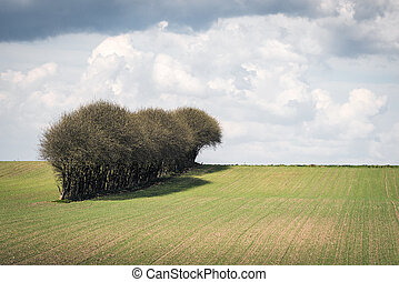 Trees on a row on a field