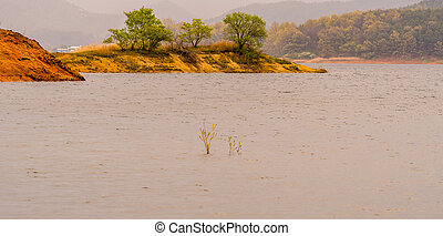 Trees on a sandy island in lake