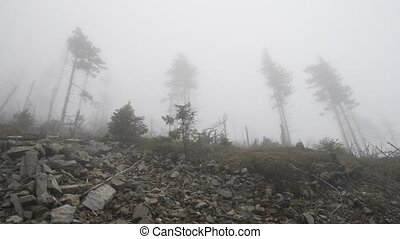 Trees on a slope in heavy fog - Trees on a mountain slope in...