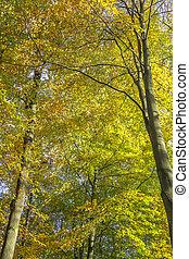 Trees on a sunny autumn day