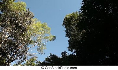 Trees On Amazon River - Shipping On Amazon River