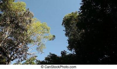 Trees On Amazon River