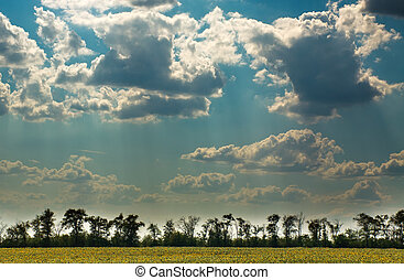 Trees on background of blue sky with clouds