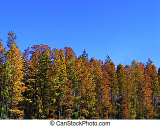 Trees on blue vivid  sky background