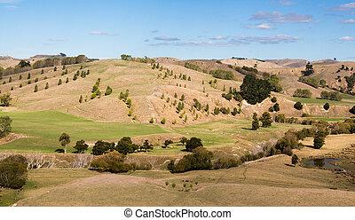 Trees On Dry Hills