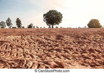 trees on dry land.