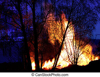 Trees on fire - Trees in front of bonfire, creating an...