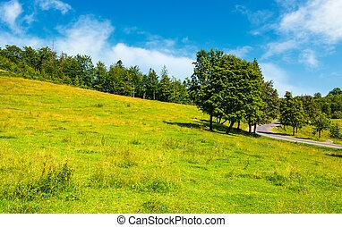 trees on grassy hill along the road. vivid summer landscape...
